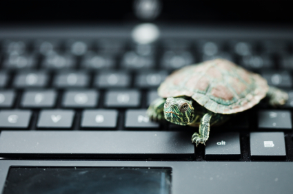 Turtle on a keyboard, like slow IT people. It's a metaphor.
